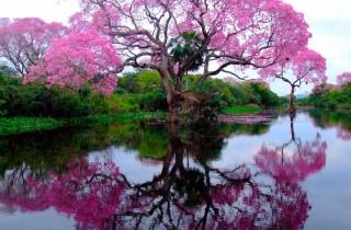 Amazing-Treess