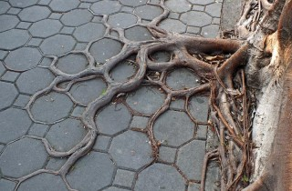 roots-view-bankok-tree